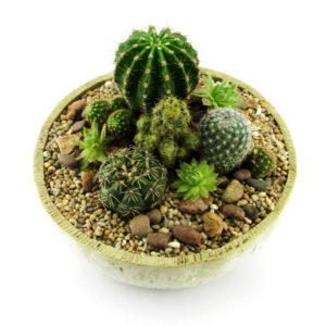 Mini jardín de cactus 1B