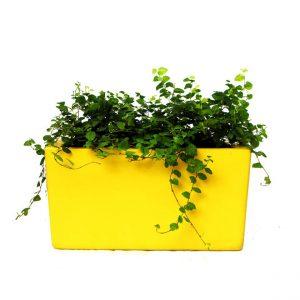 jardinera-1