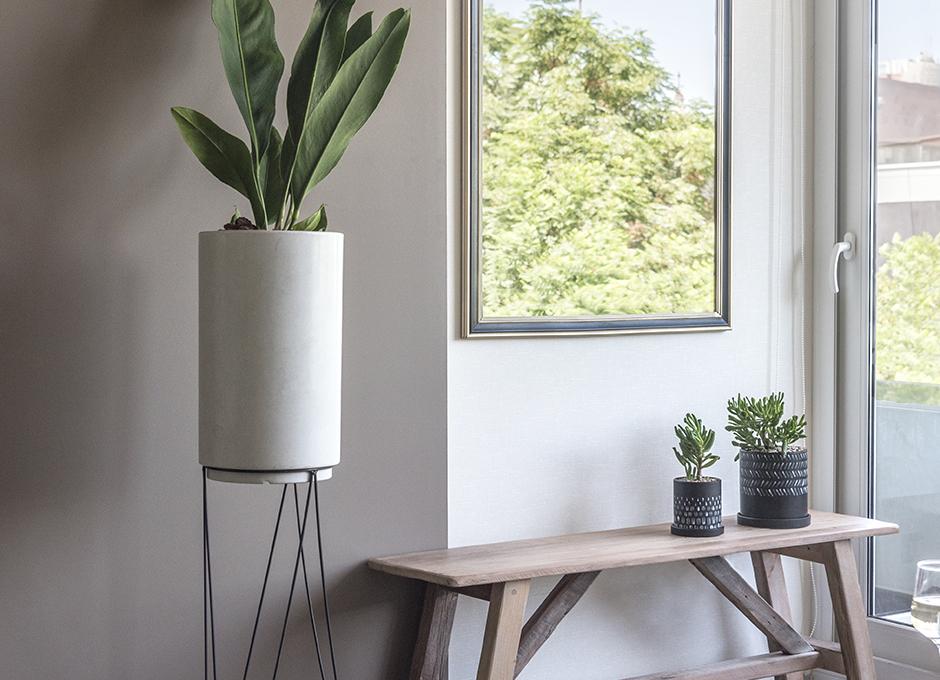 Plantas y espejo