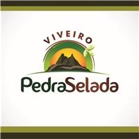 Viveiro Pedra Selada, Logo e Identidade, Tecnologia & Ciencias