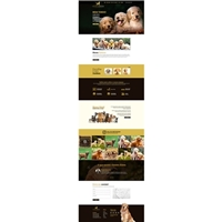 Golden Dream Kennel, Web e Digital, Animais