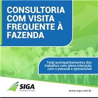 SIGA Consultoria Pecuária, Web e Digital, Consultoria de Negócios