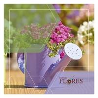 Instituto Flores, Web e Digital, Educação & Cursos