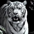 Tigre Alemão - Usuário do Proprietário Direto
