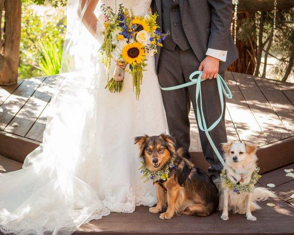 Pets no seu casamento: Dicas importantes