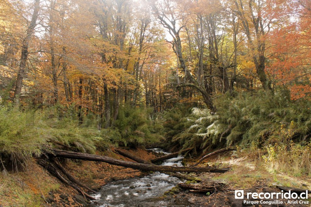Parque Nacional Conguillío en otoño