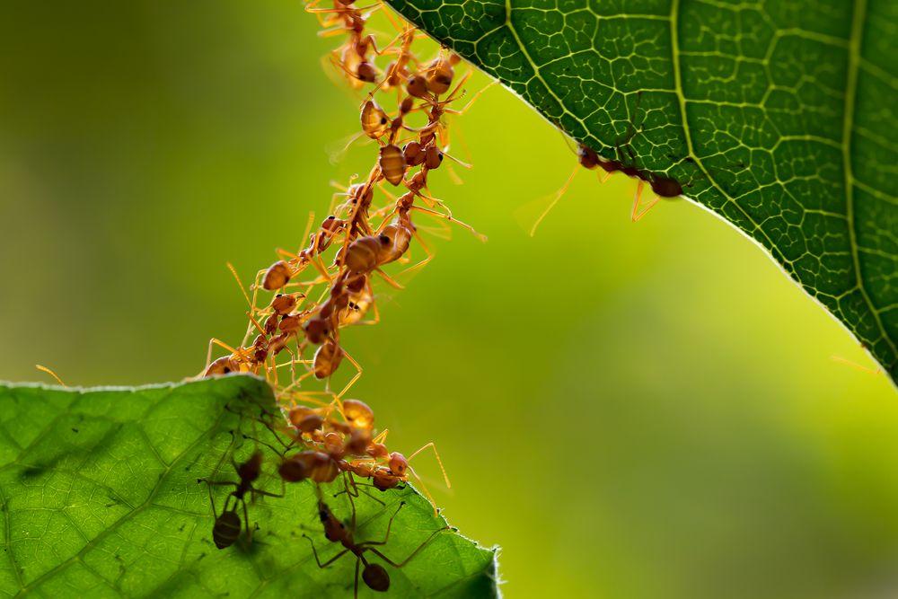 Qué son los gastos hormiga y cómo controlarlos para ahorrar