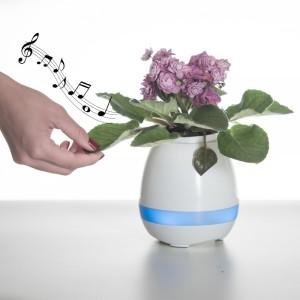 Vaso de planta musical