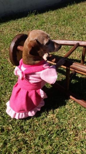 Vestido Jardineira Para Pet - Roupas para Cães