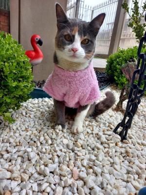 Capa Com Lacinho Para Pet - Roupas para Gatos