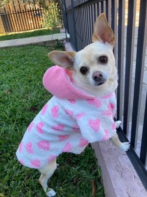 Capa Com Capuz Para Pet - Roupas para Cães