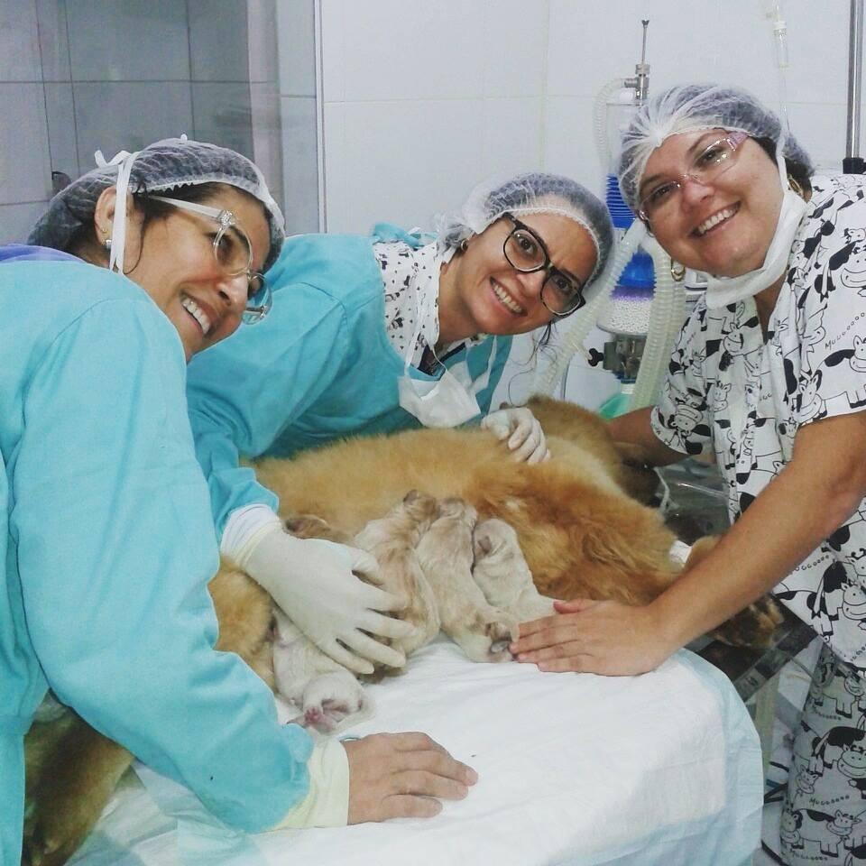 Cirurgia e Anestesia com segurança