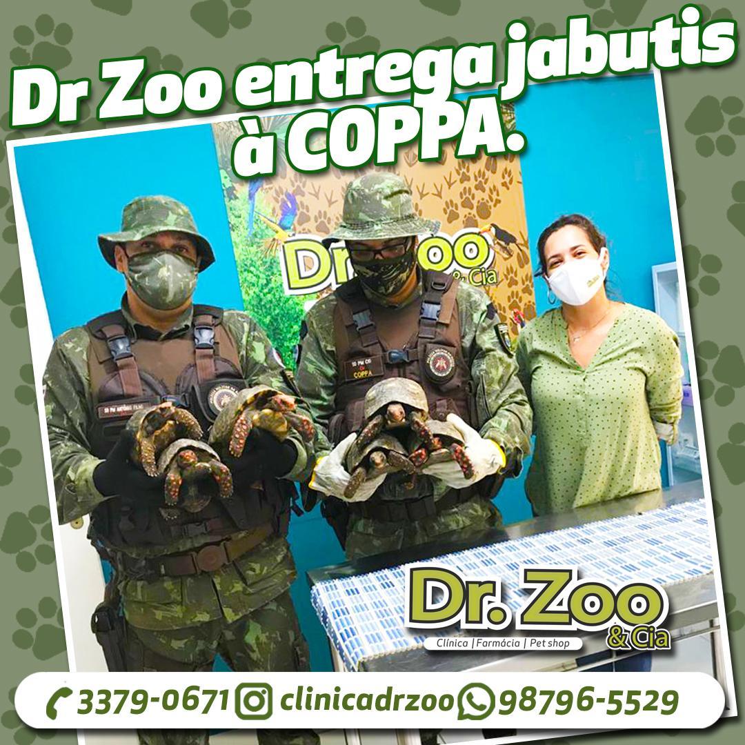 Jabutis são entregues à COPPA pela Dr. Zoo
