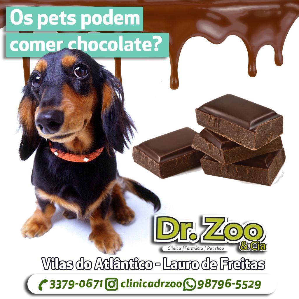 Os pets podem comer chocolate?