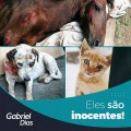 Punição a agressores de animais