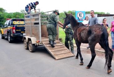 Entenda a lei 8.609 de autoria do vereador Brasil, que proíbe as carroças em São Leopoldo