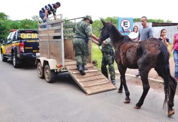 Projeto que retira as carroças de circulação, de autoria do vereador Brasil Oliveira, entra em votação nesta quinta