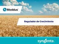 Regulador de Crecimiento Moddus 250 EC