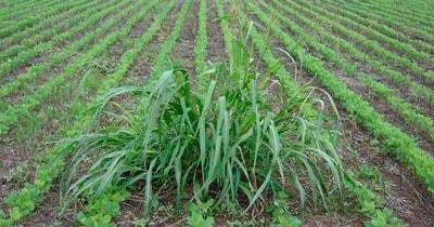 Herbicidas en Agrofy