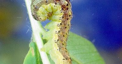 Insecticidas en Agrofy