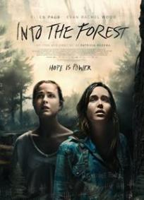 No Escuro da Floresta
