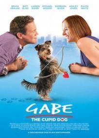 Gabe - The Cupid Dog