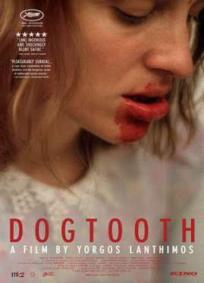 Dente Canino