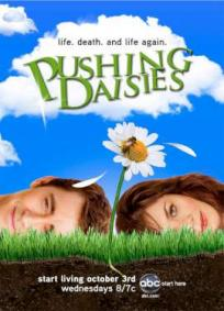 Pushing Daisies - 1ª Temporada