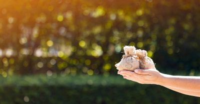 consultar-restituicao-imposto-de-renda