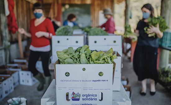 caixas com legumes orgânicos
