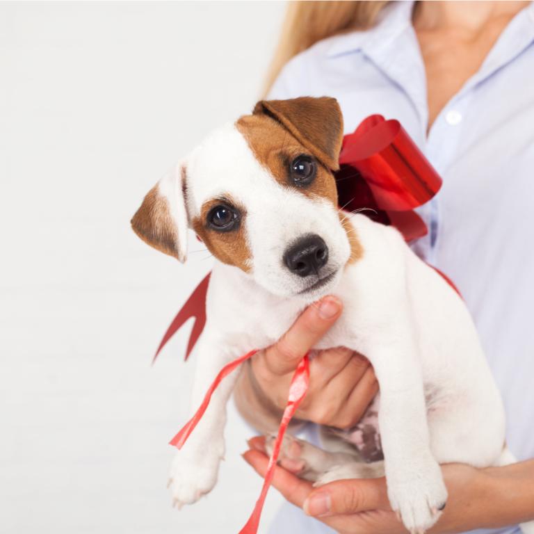 É correto presentear crianças com animais? com Dr. Marcos Fernandes