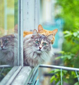 5 coisas que você não sabia sobre seu gato com Mari Castro