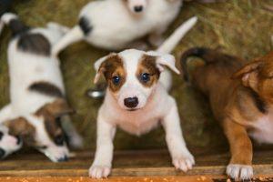 5 dicas de adoção de animais da Dra. Ana Carolina