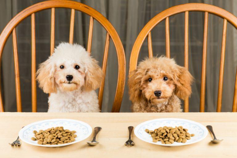 Alimentar x Nutrir: o que seria ideal para o seu pet com Dr. Alexandre Correia