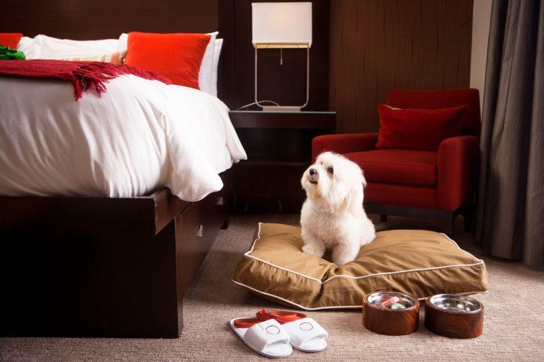 10 acomodações boas para cachorro (e para seu dono)