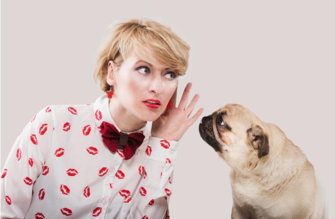 Comunique-se com seu cachorro com Dr. Renato Zanetti