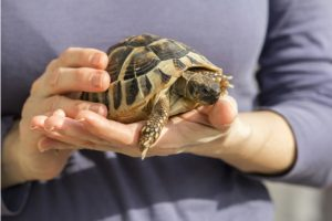 Quer ter uma tartaruga? Saiba todos os cuidados necessários com Diego Sanchez