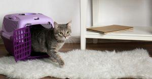 Transforme sua casa no ambiente ideal para seu gato por Luiza Cervenka