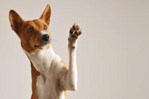 Linguagem corporal dos cães por Dr. Renato Zanetti