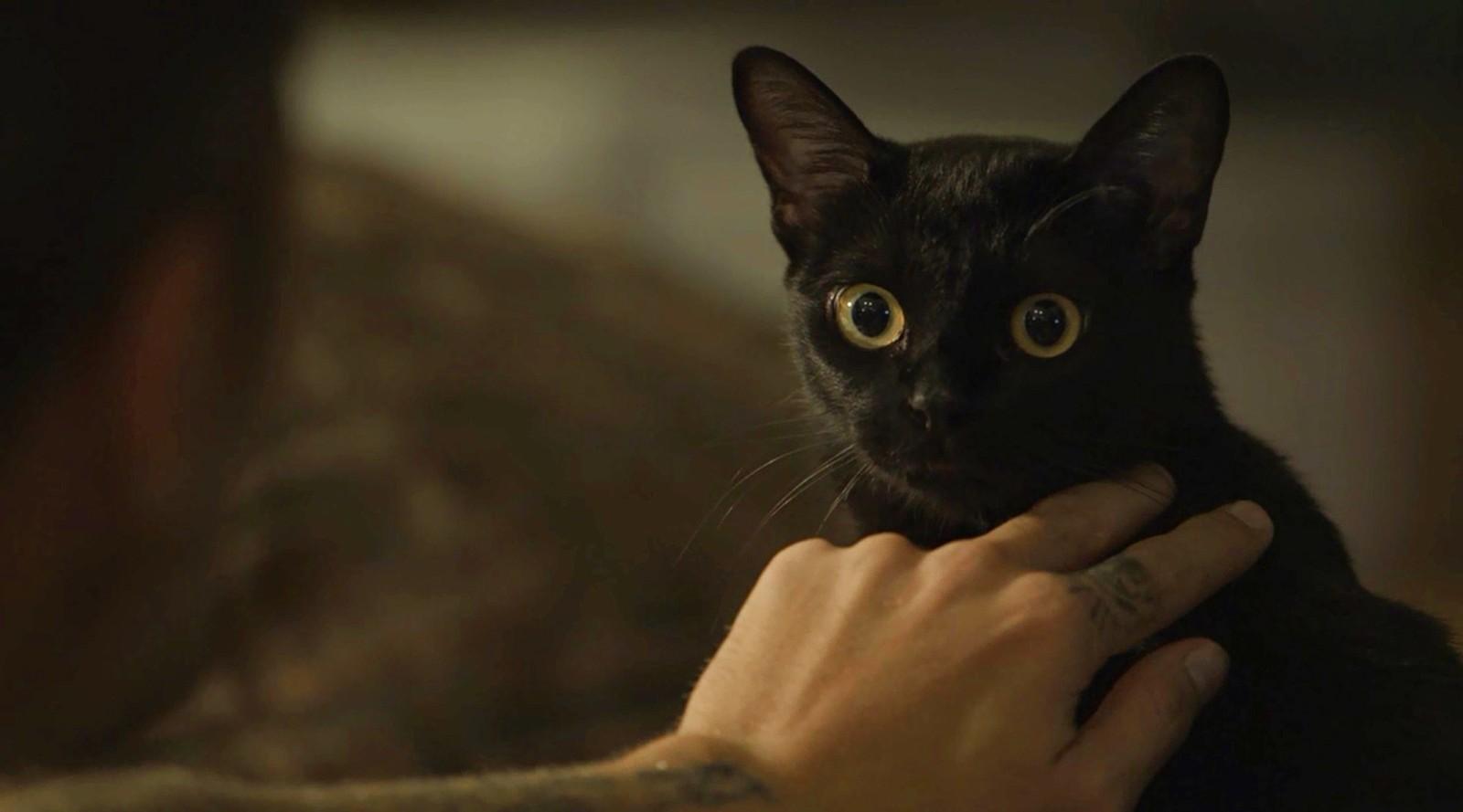Saiba como o gato León vai virar homem em O Sétimo Guardião