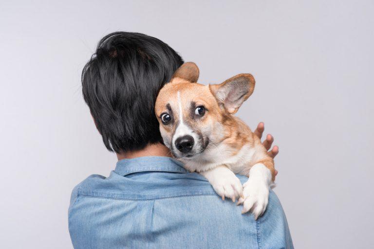 Fogos de artifício e cães, como lidar? por Dr. Renato Zanetti