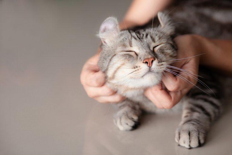 Catsitter por Luiza Cervenka