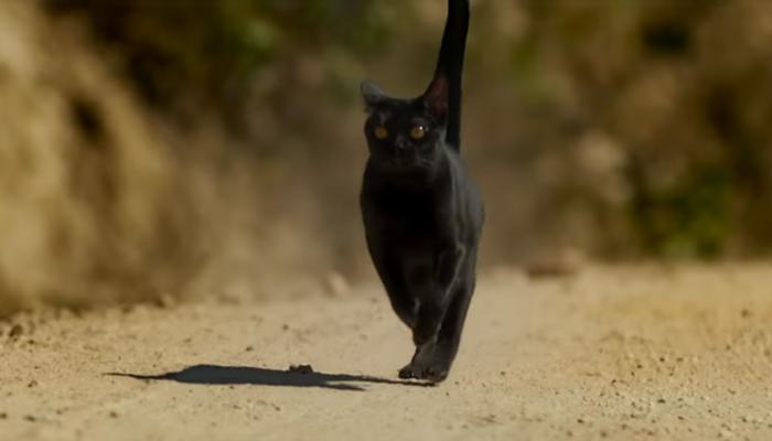 Gato preto de O Sétimo Guardião faz hora extra na Globo e aparecerá em O Tempo Não Para
