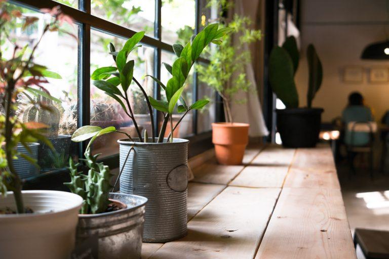 Cuidados com as plantas no caso de viagem por Letícia Momesso