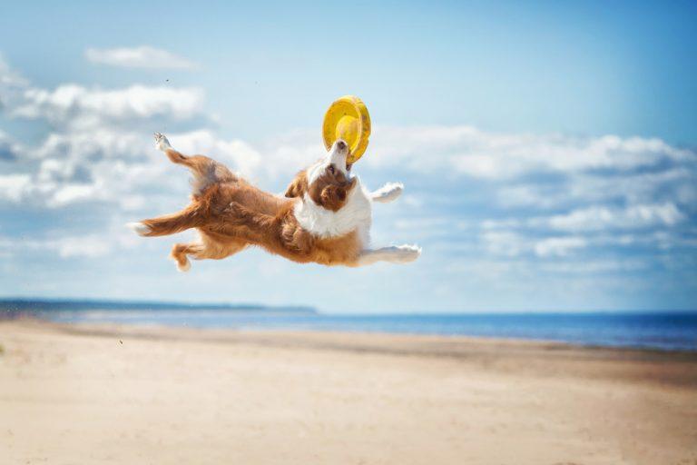 Como lidar com um cão hiperativo? por Thamires Pacheco