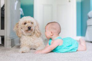 Bebês x cachorros por Dr. Renato Zanetti