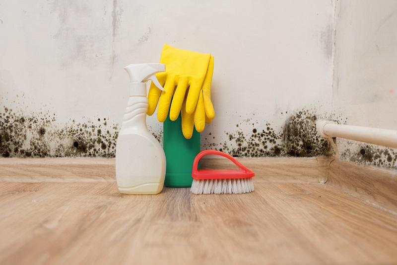 como tirar umidade da parede, como tirar mofo