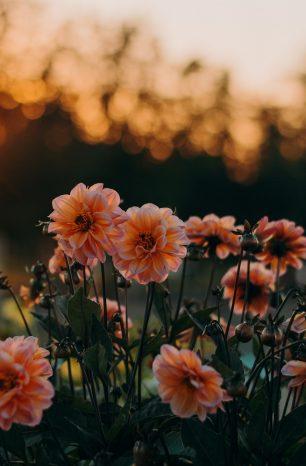 Decoração de primavera: saiba como organizar e preparar a sua casa para a primavera