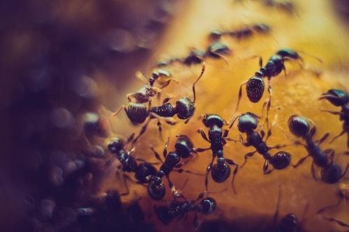 como acabar com formigas, como eliminar formigas, como acabar com insetos em casa