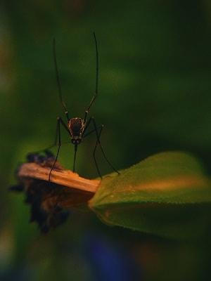 como espantar mosquitos, como acabar com mosquitos, como eliminar os mosquitos, como acabar com insetos, como acabar com formigas